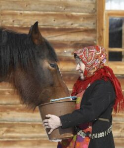 "Galina Konyeva, 74, a member of the singing group ""Buranovskiye Babushki"", feeds a horse at a folk museum near the village of Ludorvai in the central Russian region of Udmurtia March 16, 2012. A group of ladies ranging in age from 43 to 86 who sing traditional songs and pop classics in their own language have been voted by popular demand to represent Russia in the forthcoming Eurovision song contest. Picture taken March 16. REUTERS/Sergei Karpukhin (RUSSIA - Tags: ENTERTAINMENT SOCIETY)"